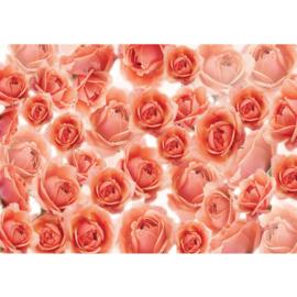 Fotobehang poster 0959 bloemen rozen zalm roze