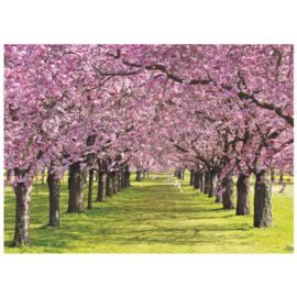 Fotobehang poster 2950 boomgaard roze