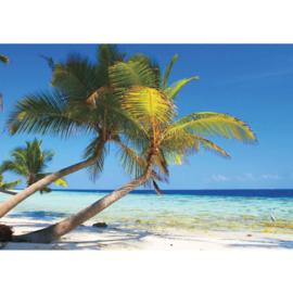Fotobehang poster 1101 strand palmboom zee uitzicht tropen