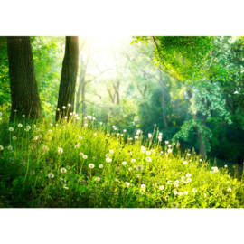Fotobehang poster 0030 bomen bos paardenbloem gras natuur