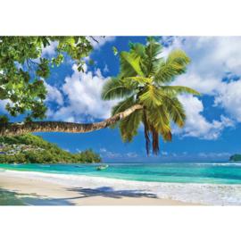 Fotobehang poster 3288 cariben zee palm strand