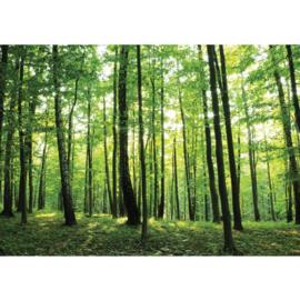 Fotobehang 528 bomen bos 400 x 280