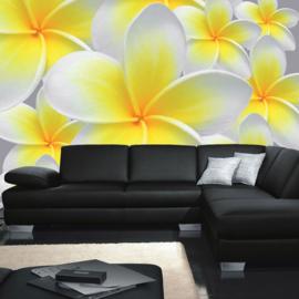Fotobehang poster 0274 bloemen orchidee geel