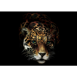 Fotobehang poster 3257 dieren jaguar roofdier tijger