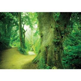 Fotobehang poster 0865 bomen groen bos planten