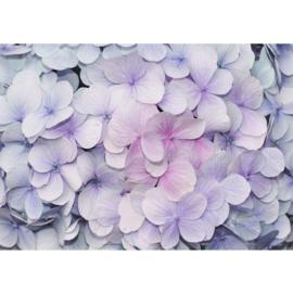 Fotobehang poster 2273 bloemen viool roze
