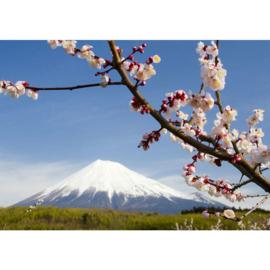 Fotobehang 2318 bloemen bloesem bergtop sneeuw
