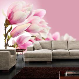 Fotobehang poster 0014 magnolia bloemen bloesem roze