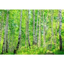 Fotobehang poster 0007 berken bos natuur zon