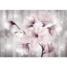 Fotobehang poster 1770 magnolia bloemen planten roze