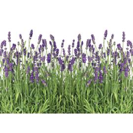 Fotobehang poster 0612 lavendel planten paars groen