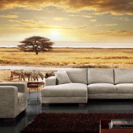Fotobehang poster 0236 natuur dieren zebra safari