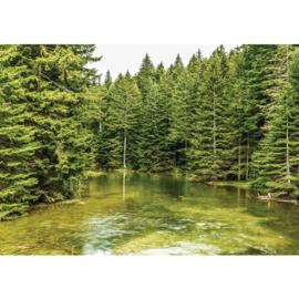 Fotobehang poster 1616 natuur rivier denneboom