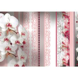 Fotobehang poster 2108 bloemen orchidee strepen