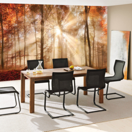 Fototbehang poster 3341 bos bomen natuur zonnestralen herfst