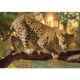 Fotobehang poster 0728 dier luipaard boom zonsondergang  tijger
