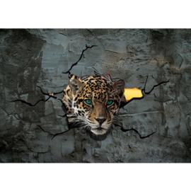 Fotobehang posdter 2861 tijger luipaard roofdier kop  blauwe ogen beton muur