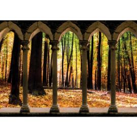 Fotobehang poster 2801 bomen bos zuilen