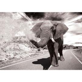 Fotobehang poster 2557 dieren olifant safari road weg