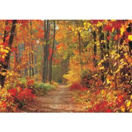 Fotobehang bos 0994 bomen voorjaar bladeren