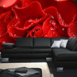 Fotobehang poster 0024 bloemen rozen roos rood druppels