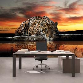 Fotobehang poster 00315 tijger wilde dieren kleur