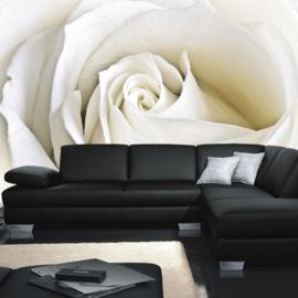 Fotobehang poster 1099 bloemen rozen roos wit