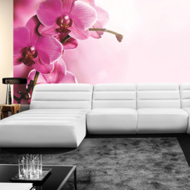 Fotobehang poster 1809 orchidee bloemen planten roze paars