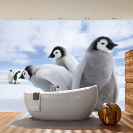 Fotobehang poster 2658 dieren pinguin antartica noordpool babypinguin