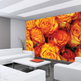 Fotobehang poster 0984 bloemen rozen roos oranje