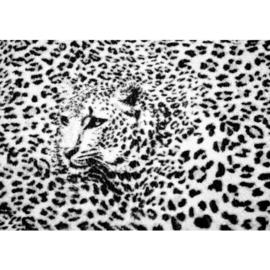 Fotobehang poster 2264 dieren tijgerprint zwart wit luipaard roofdier