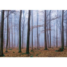 Fotobehang poster 0819 bomen bos herfst bruin