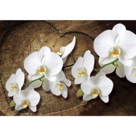 Fotobehang poster 1819 bloemen orchidee wit hout hart