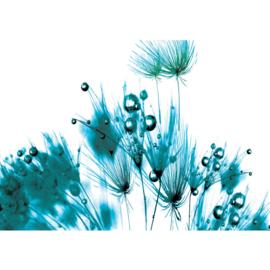 Fotobehang poster 0806 bloemen planten blauw