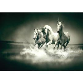 Fotobehang poster 1018 dieren eenhoorn paarden unicorn grijs