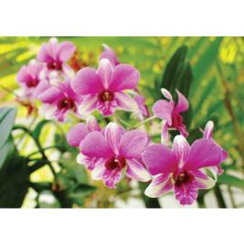 Fotobehang poster 1901 bloemen planten orchidee roze