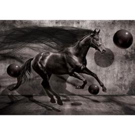 Fotobehang poster 2533 dieren paarden zwart black horse