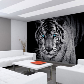 Fotobehang poster 0426 dieren tijger met blauwe ogen