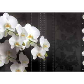 Fotobehang poster 1828 bloemen orchidee planten wit