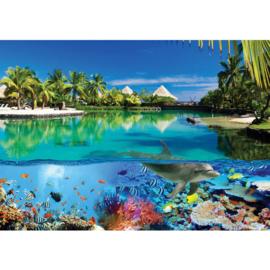 Fotobehang poster 2044 dieren dolfijn onderwater koraalrif bal vissen