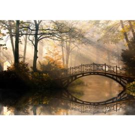 Fotobehang poster 0264 bos bomen brug water herfst
