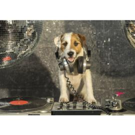 Fotobehang poster 3293 dieren hond disco muziek dj
