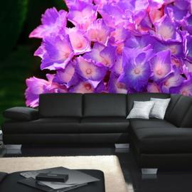 Fotobehang poster 1478 bloemen paars natuur