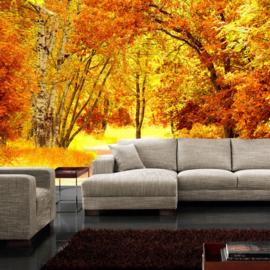 Fotobehang 0079 bos herfst geel bladeren natuur pad