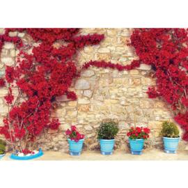 Fotobehang poster 1671 bloemen muur rood