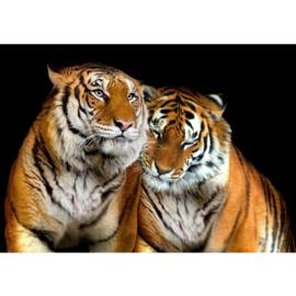 Fotowand poster 0322 dieren tijger roofdier safari