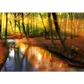 Fotobehang 0252 herfst bos bomen bladeren beek