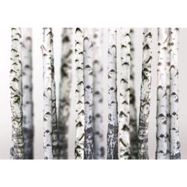 Fotobehang poster 0044 berken bos natuur wit zwart