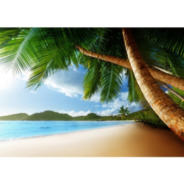 Strand palmbomen vlies fotobehang 350 x 245