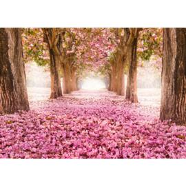 Fotobehang poster 0151 bos bomen herfstbladeren roze